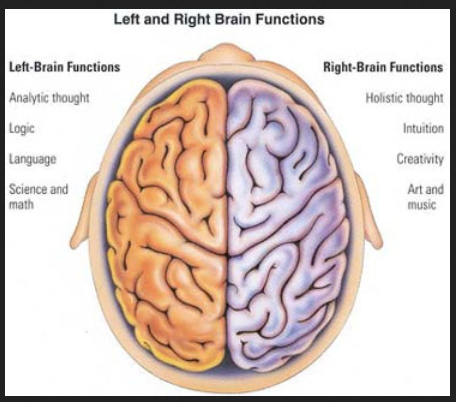 brain+cole+hall+2+parts