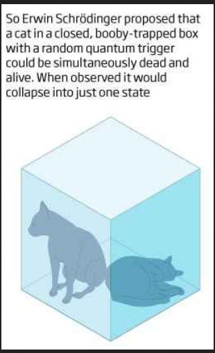 schrodinger cat pier