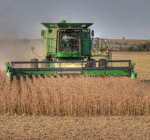 soybean harvet