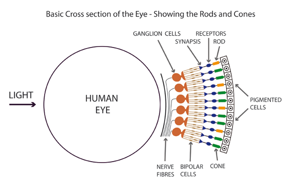 eye rod hillary clinton